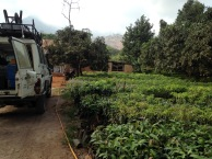 Morogoro - buying some fruit trees