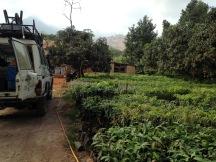 Morogoro - buying some fruit trees