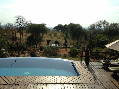 View from the lodge...those are elephants!
