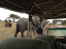 Elephants getting close up on safari
