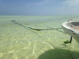 Indian Ocean - Zanzibar