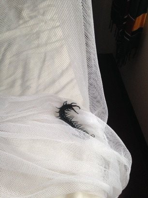 Woke up one morning with this creepy-crawler on the outside of my net - Southern TZ