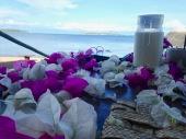 Breakfast at Lake Tanganyika