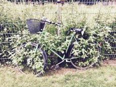 So many abandoned bikes across Berlin