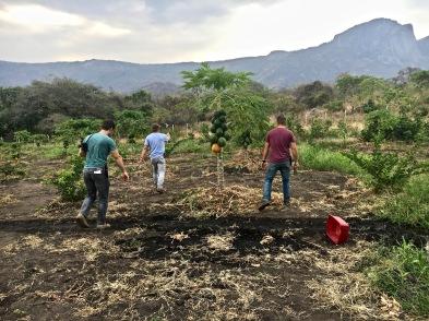 Exploring some papaya trees - Rukwa Valley