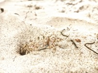 LIttle crab friend in dar
