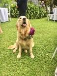 The wedding mascot!
