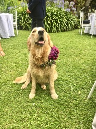 The wedding mascot!